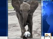 Nelly the Elephant predicts Women s World Cup | BahVideo.com