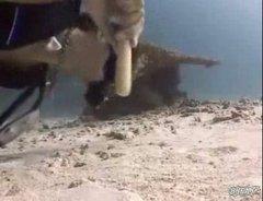 Mureen bites of divers thumb | BahVideo.com
