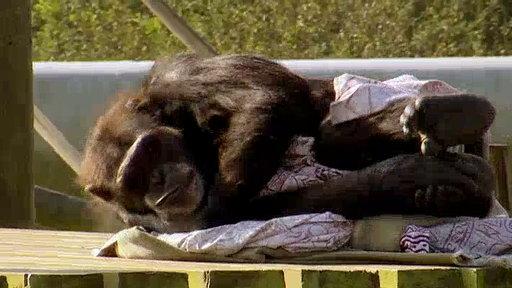 Monkey Life - Episode 4   BahVideo.com