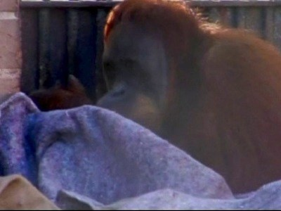 Primates Wrap Up Warm In Brazil | BahVideo.com