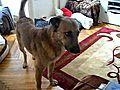 Keyla and Dexter | BahVideo.com