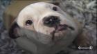 Tratta di animali venduti persino in spiaggia | BahVideo.com
