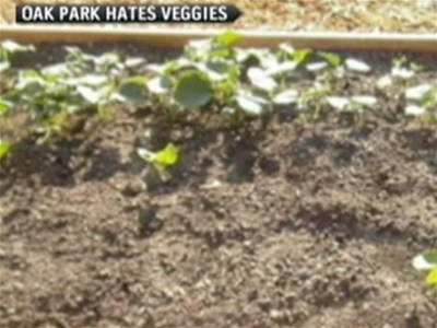 Woman faces jail for planting vegetable garden | BahVideo.com