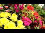 Les Serres de Dallon - Fleuriste Dallon | BahVideo.com