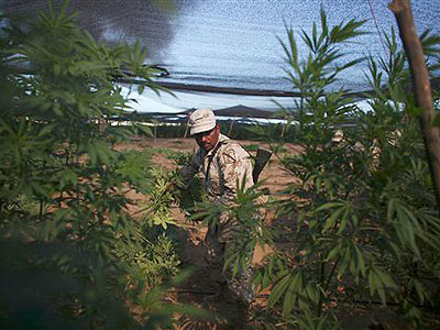 Raw Video: Biggest marijuana field ever found   BahVideo.com
