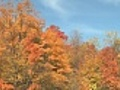 Coloured Maple Trees  | BahVideo.com
