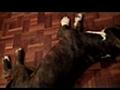 hanna aka kublai amstaff | BahVideo.com