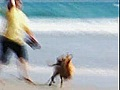 Why Dogs Rule The Beach  | BahVideo.com