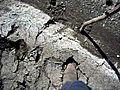 quicksand | BahVideo.com