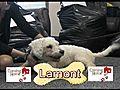 WDHA s Rock N Ruff With Lamont | BahVideo.com