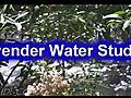 Lavander Water Studios 1st Auditions OPEN  | BahVideo.com