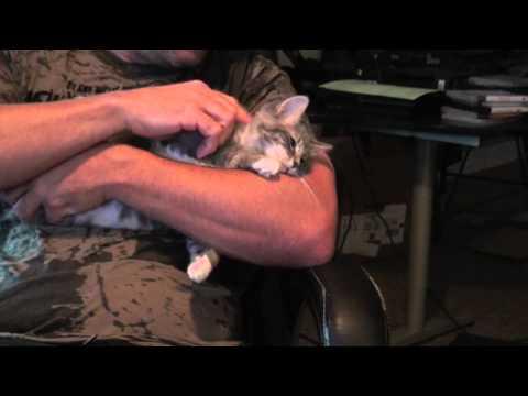 The Kitties | BahVideo.com