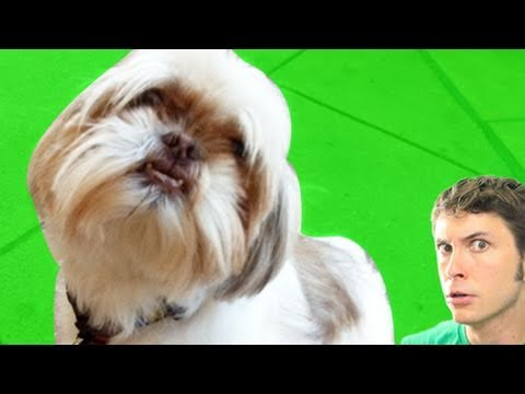 DANCE PUPPY | BahVideo.com