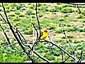 beautiful girl Bird Watching in the desert HOT | BahVideo.com