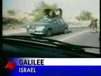 Horse Tramples Oncoming Car  | BahVideo.com