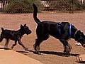 Turning Dog Waste Into Energy | BahVideo.com