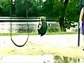 Dzieciak kontra hustawka | BahVideo.com