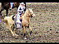 Equestrian - Party Rock Anthem   BahVideo.com