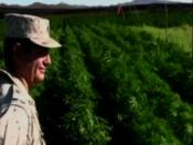Mexican soldiers bust 300 acre pot farm | BahVideo.com