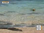 Video shows dog attacking shark in ocean | BahVideo.com