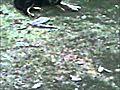 Fluffy amp Chopper Movie   BahVideo.com