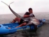 Caught on tape Man wrestles shark | BahVideo.com