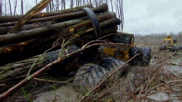 Swamp Loggers Mud Trap | BahVideo.com