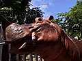 Dangerous Encounters - Undercover Hippo | BahVideo.com