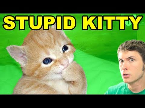 STUPID KITTY!! | BahVideo.com