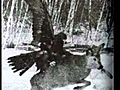 The Mighty Golden Eagle Preying on Wolves to  | BahVideo.com