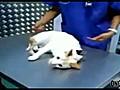 Besoin d une technique pour endormir votre chat  | BahVideo.com