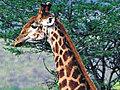 Giraffe Movie Prank | BahVideo.com