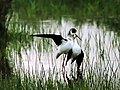 Terra d ocells | BahVideo.com