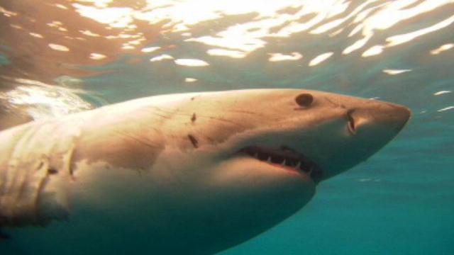 Shark Week Stalked By a Shark | BahVideo.com