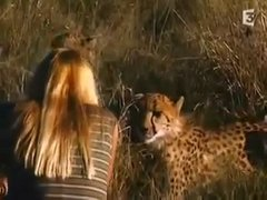 Woman Teases Wild Cheetahs | BahVideo.com
